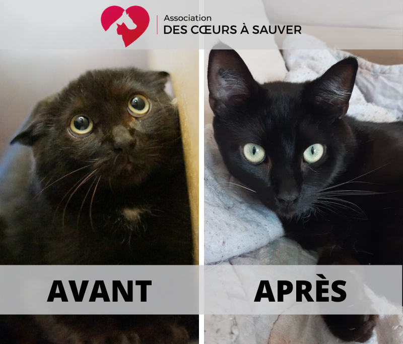 Apprivoiser chats sauvages