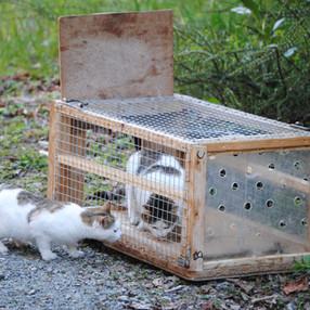 Bénévoles sauvetages/trappages chats