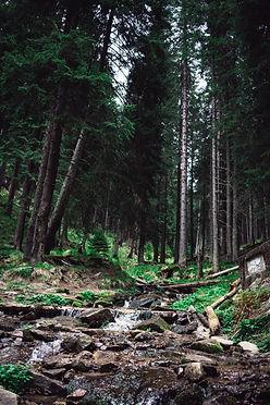 4k-wallpaper-adventure-conifers-1271620.