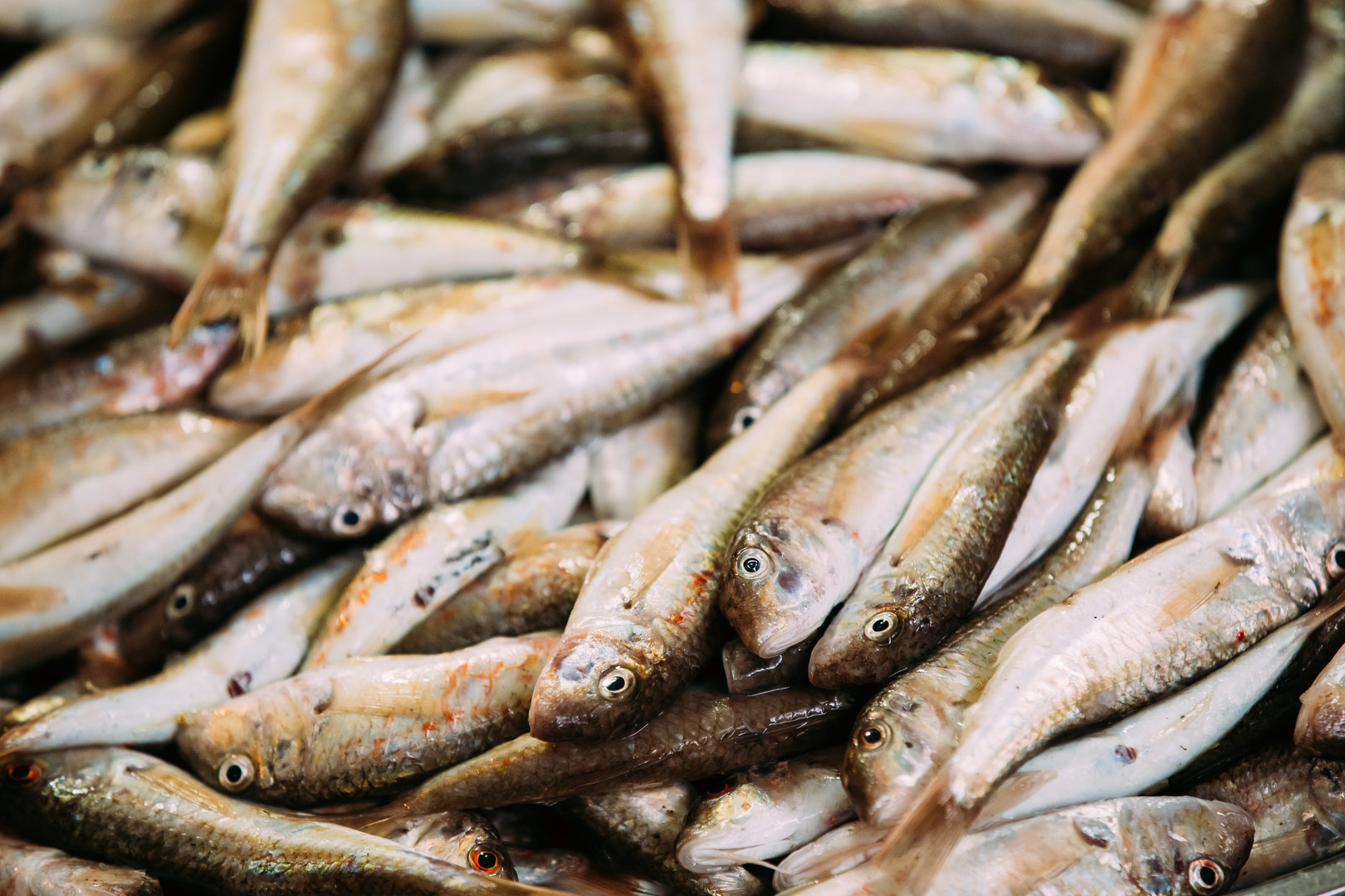 OYSTER BAR VERNON fresh-fish-on-display-
