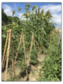 Garden closeup one.jpg