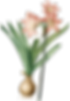 01_pink_belladonna_lily_graphicsfairy.pn