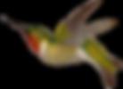 2_hummingbird_graphicsfairy.png