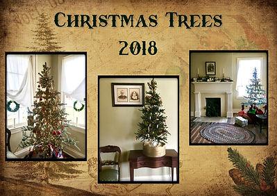 DD Christmas Trees 2018.jpeg