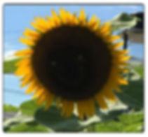 Sunny Smiles Framed.jpg