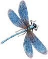 10_dragonfly_graphicsfairy.png