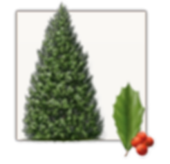 Holly Tree Texax growers.png