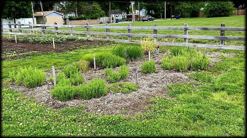 Herb garden D.D. Collins House early June 2021