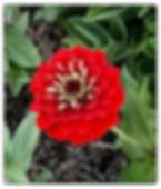 Z Red.jpg