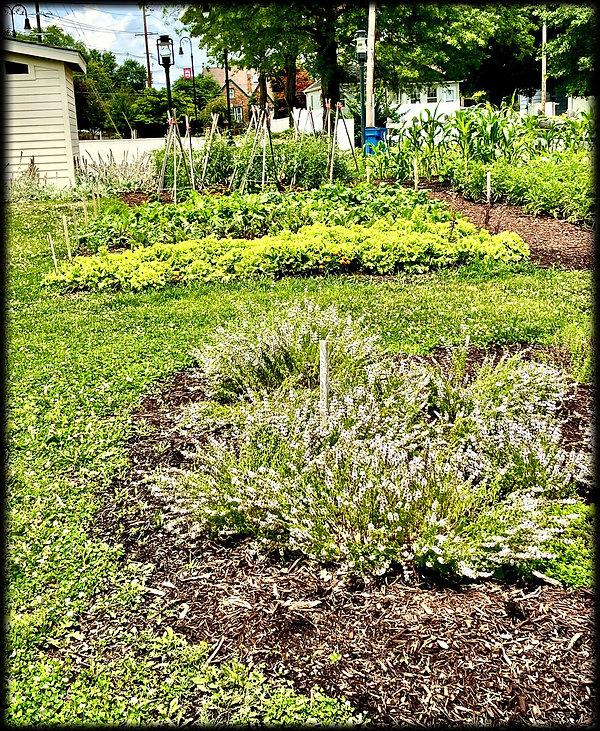 D.D. Collins House herb garden July 2021