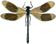 25_dragonfly_graphicsfairy.png
