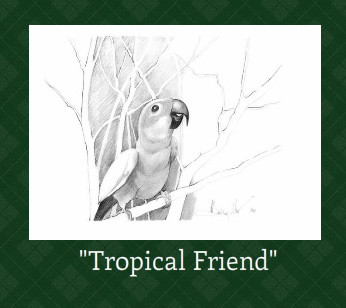 tropical birds in the midst of winter ...