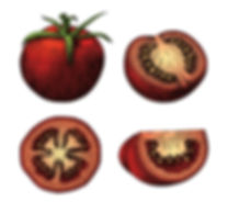 tomatoes-hand-draw-vintage-clip-art-isol