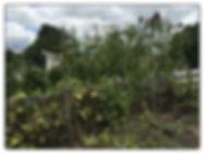 Vines 2.jpg