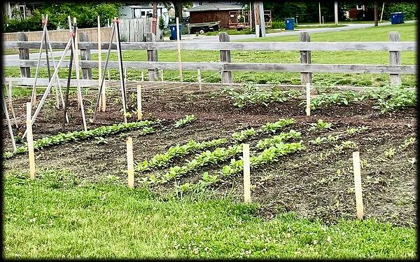 June 2021 photo of garden at D.D. Collins House, Collinsville, Illinois.