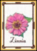Zinnia Mail_edited.jpg