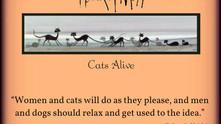black cats ...
