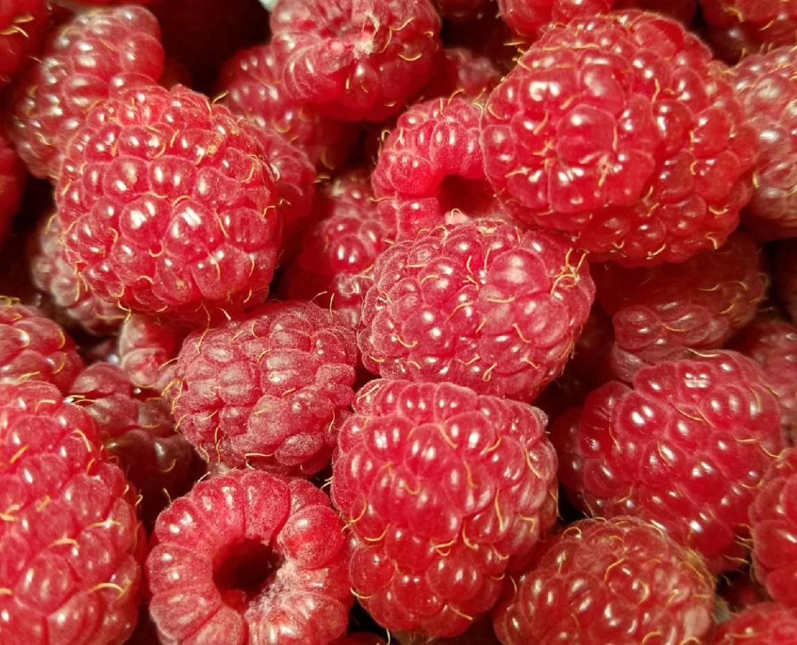 Just enough raspberries to eat