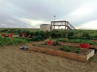 Community Garden Colby Kansas