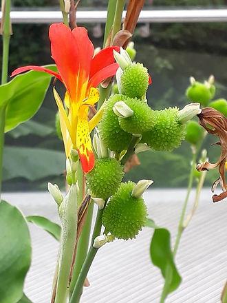 Botanic Palm flower.jpg