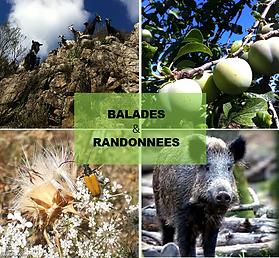 Balades_et_randonnées.png