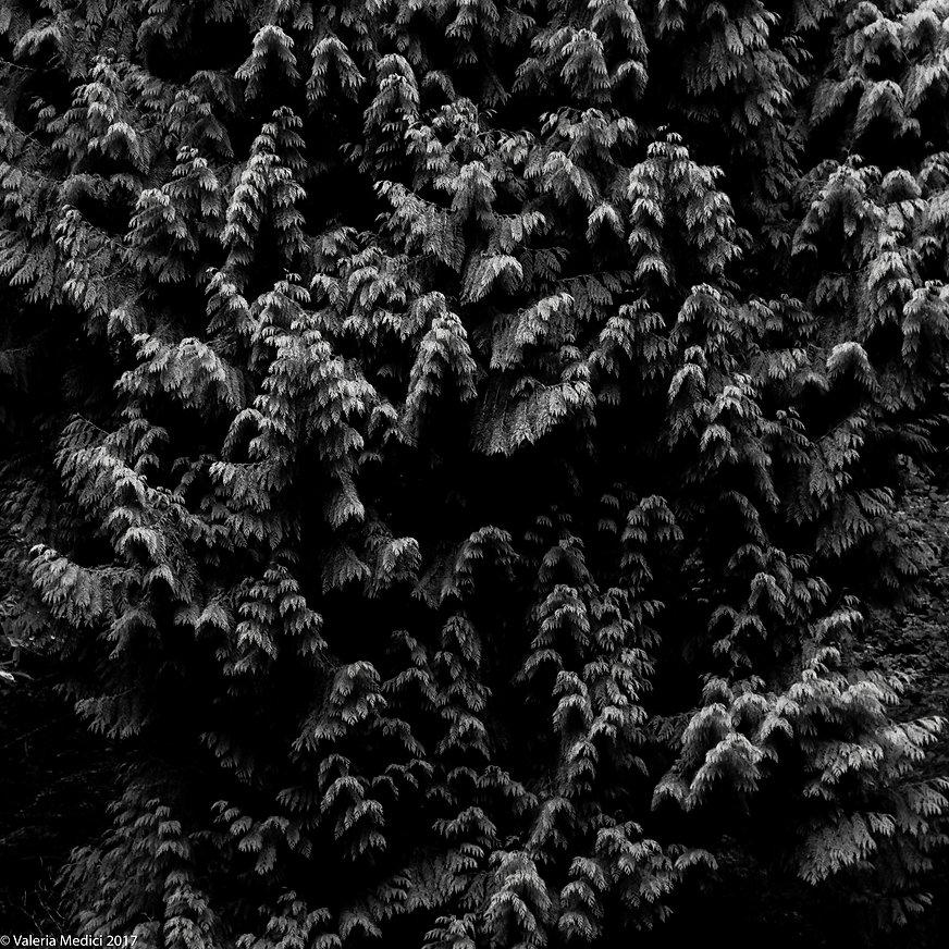 2.Forest of Dean.jpg