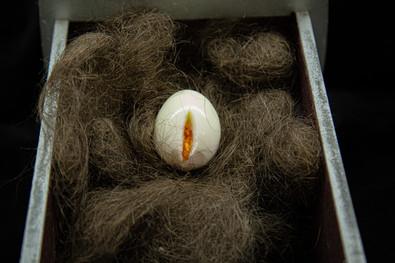 Egg in Hiry Nest-18401.jpg