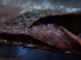11_Dead Grass_10X lens