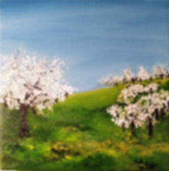 Blossom almonds trees