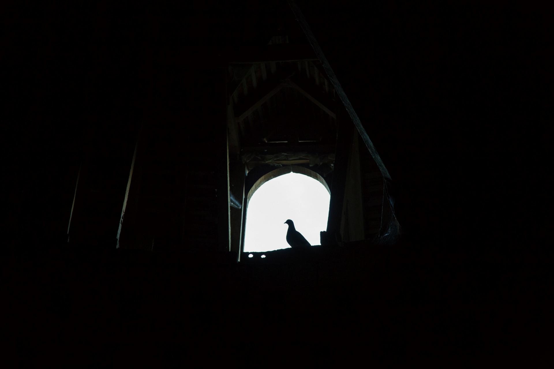 Regard sur le pigeonnier...