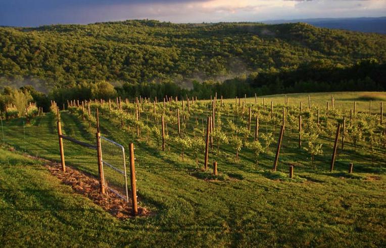 Walople Mountain View Winery