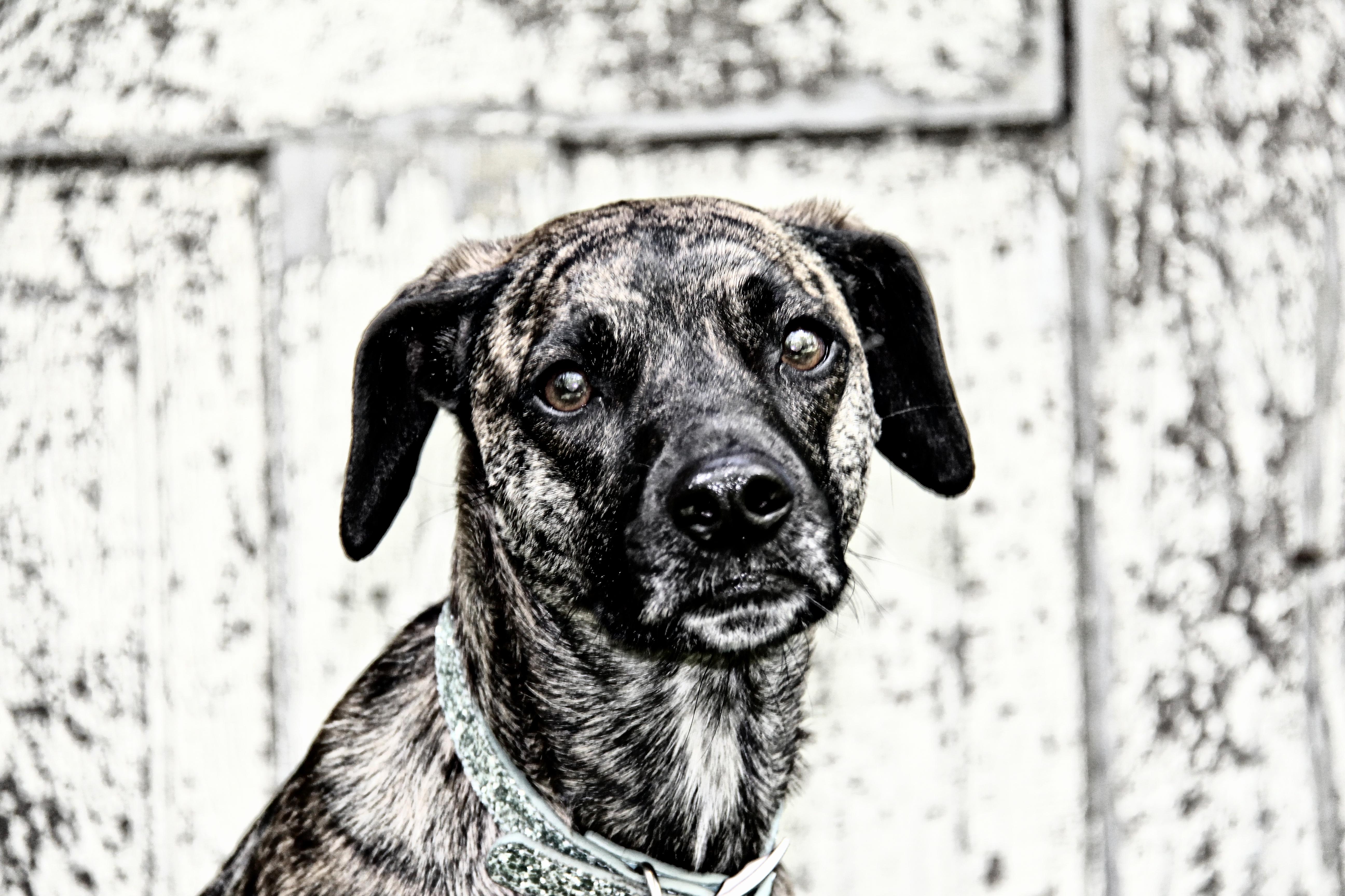 Salt & Pepper Photography Pets