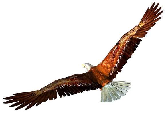 Eagle-3_edited.png