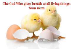 God gives breath to all