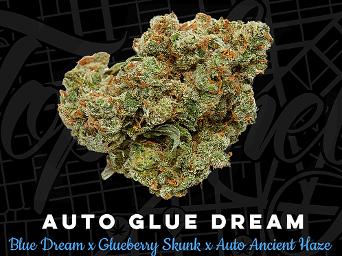 Auto Glue Dream