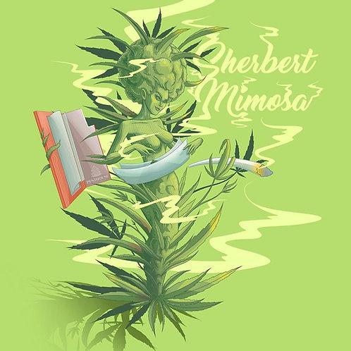 Sherbert Mimosa