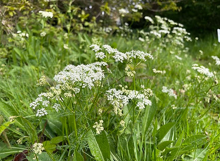 Worcestershire foraging course