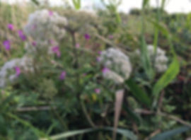 Wild edible plants on a Birmingham Foraging Couse