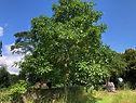 Walnut Habitat