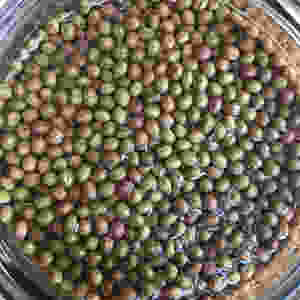 The finished product - elderberry capers
