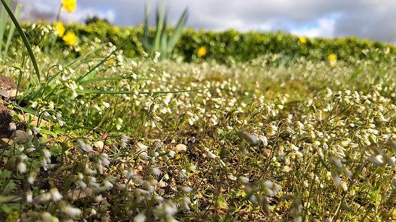 Northampton foraging course strip