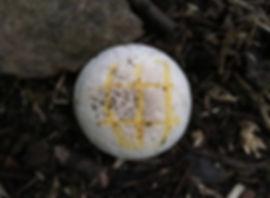 Yellow Stainer - Agaricus xanthodermus - bruising yellow