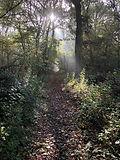 Buckinghamshire Foraging Course