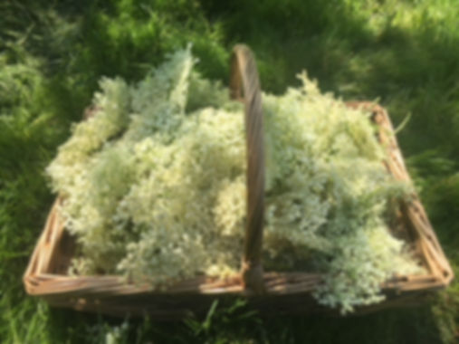 Foraging basket - wild edibles o a foraing course
