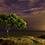 Thumbnail: Alone tree