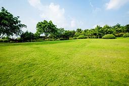 grasland-landschaft-und-greening-umwelt-