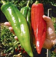 Big Chili Pepper