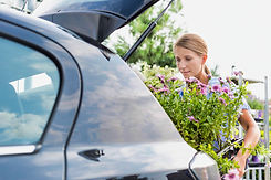 Curbside Pickup Flowers and Plants