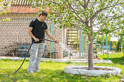 Tips for Watering a newly planted Tree