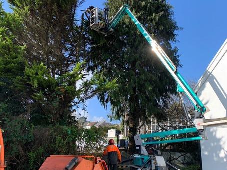 IMER 19 assisting tree surgeons